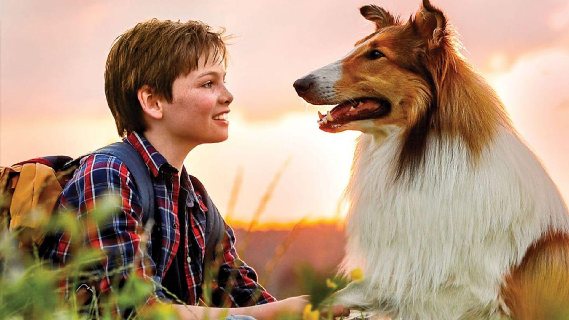 Lassie kommer hjem - Med dansk tale_slide_poster