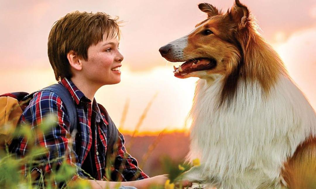 Lassie kommer hjem - Med dansk tale_poster